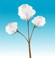 cotton plant vector image vector image