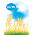 barley field with the blue sky and the sun vector image