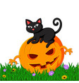 black cat sitting on halloween pumpkin vector image