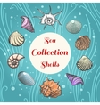 Sea shells composition with text vector image vector image