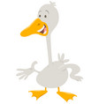 Cute goose farm animal character vector image