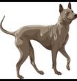 color sketch Thai Ridgeback Dog breed runs vector image vector image