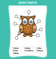 owl vocabulary part of body vector image