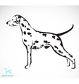 dog Dalmatian vector image vector image
