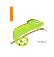 Letter I Iguana Zoo alphabet English abc with vector image