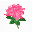 flowers pink rhododendrons twig vector image