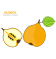 Quince fruit vector image