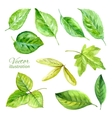 Set of spring leaves watercolor vector image