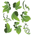 eco health and beauty vector image vector image