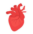 human heart icon flat style internal organs vector image