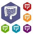 Intestines icons set vector image vector image