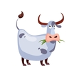 Cow Chewing Grass vector image