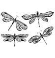 decorative dragonflies set vector image