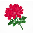 flowers red rhododendrons twig vintage vector image