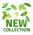 New collection of spring vector image