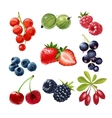 Set of icons juicy ripe berries vector image
