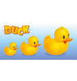 Yellow ducks vector image