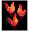 cock bird farm vector image