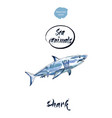 blue shark watercolor vector image