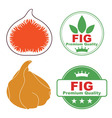 Fig vector image