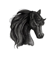 Black horse head sketch portrait vector image