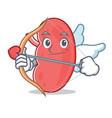 cupid kidney character cartoon style vector image
