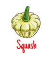 White pattypan squash vegetable isolated sketch vector image