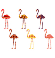 Flamingo pattern Flamingo isolated vector image