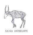 Saiga anteloperare animal conservation status vector image