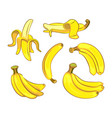 bananas in cartoon style vector image