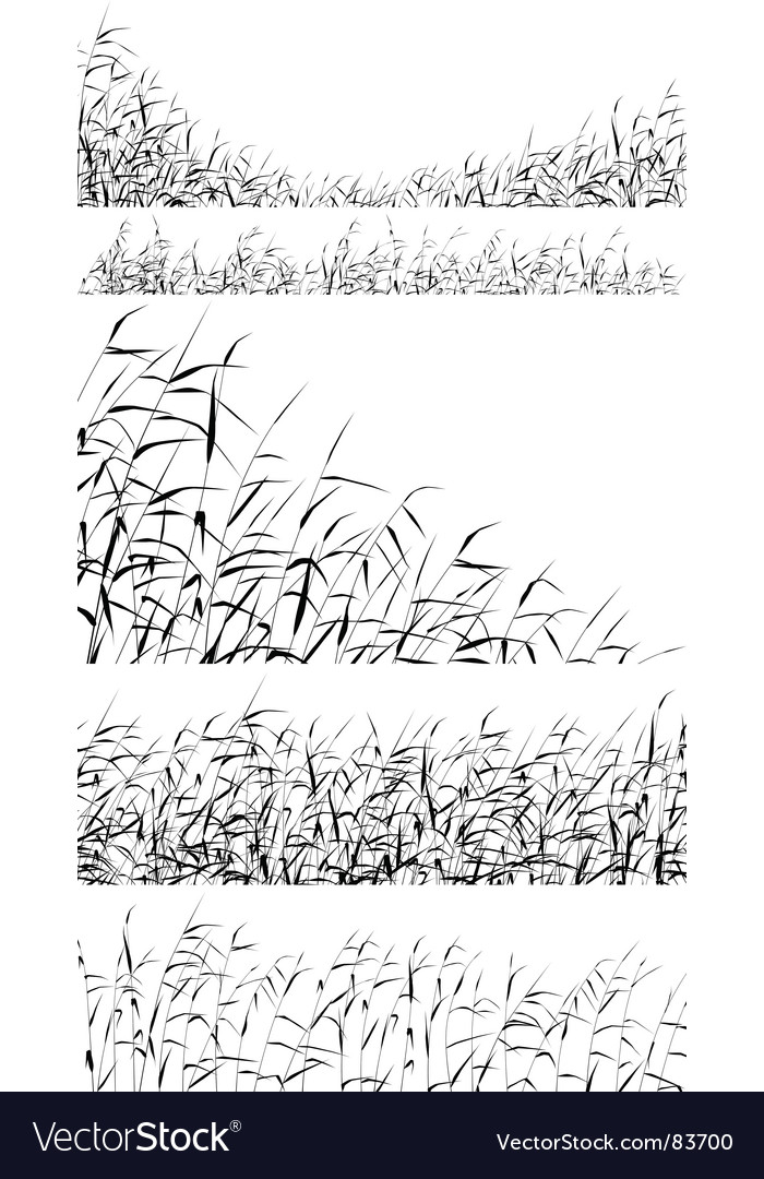 Reed foregrounds vector