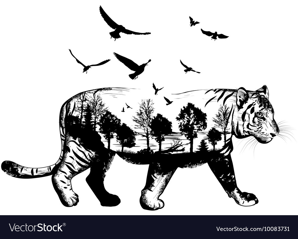 Hand drawn tiger for your design wildlife concept vector