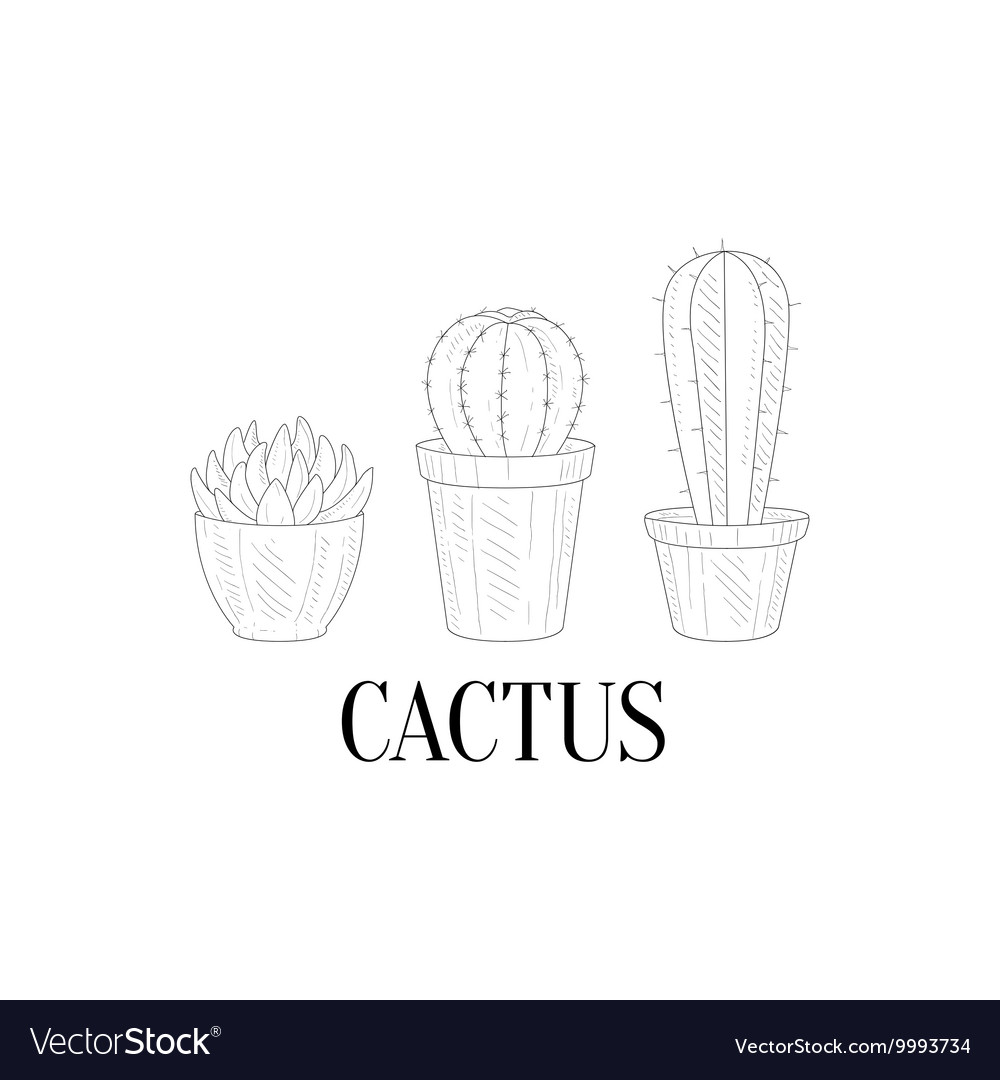Three chubby home cacti hand drawn realistic vector