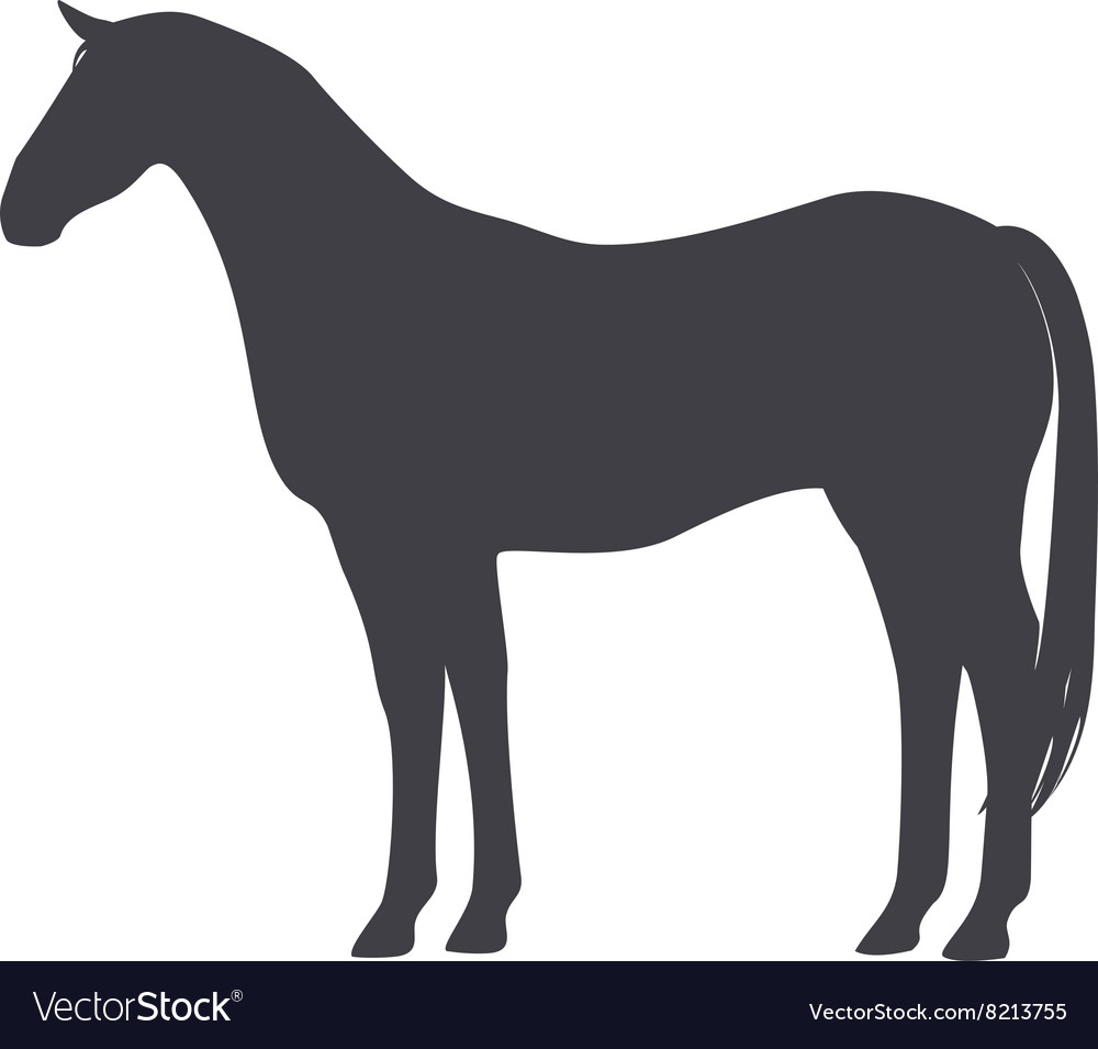 Black horse isolated on a white background vector