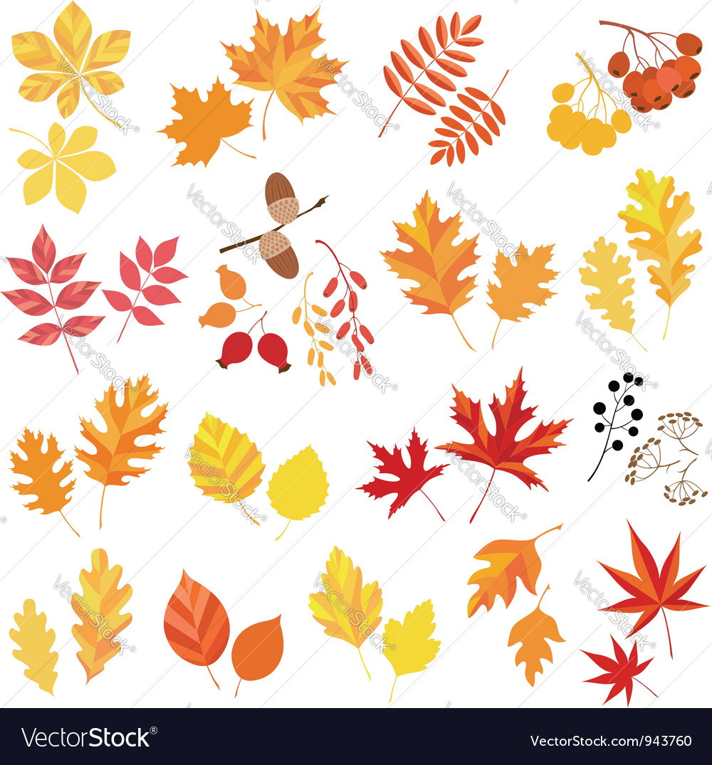 Autumn leaves and berries vector