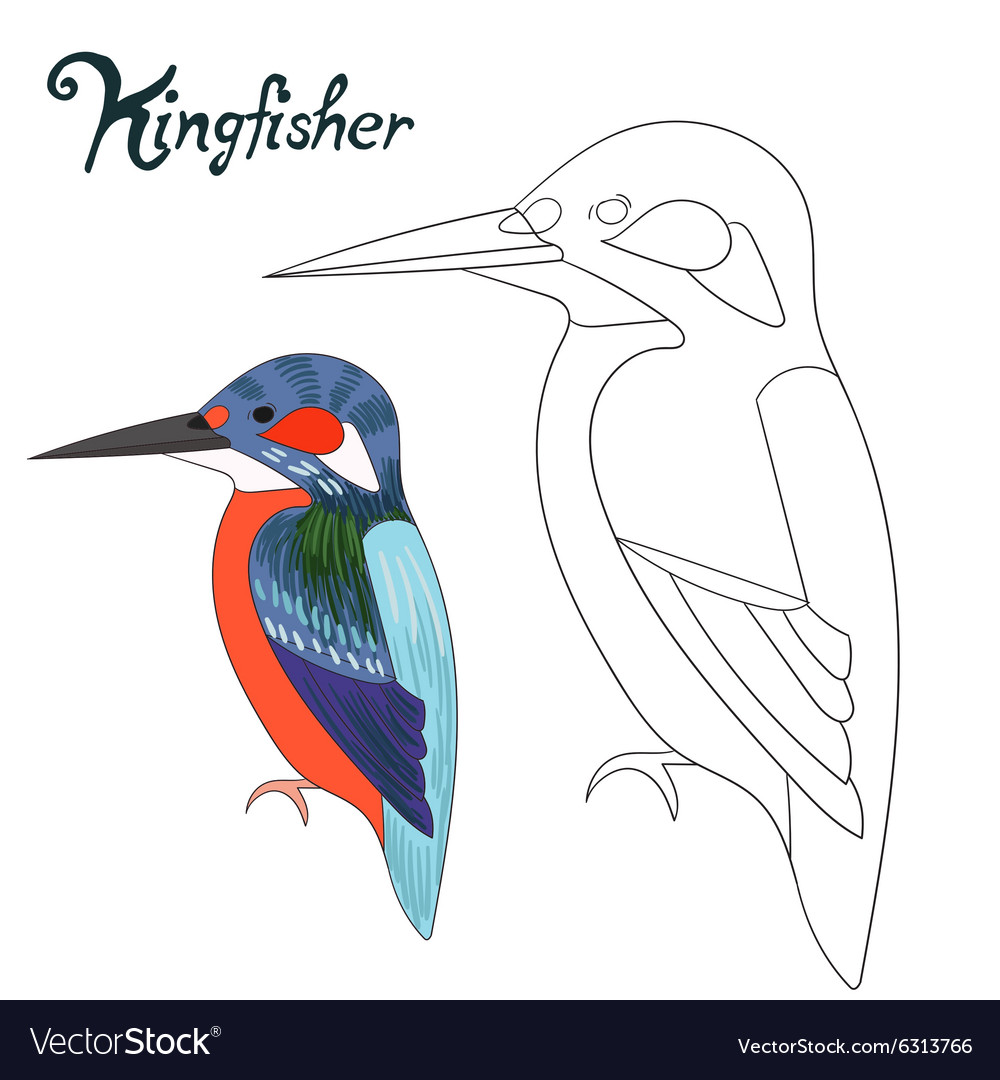 Educational game coloring book kingfisher bird vector