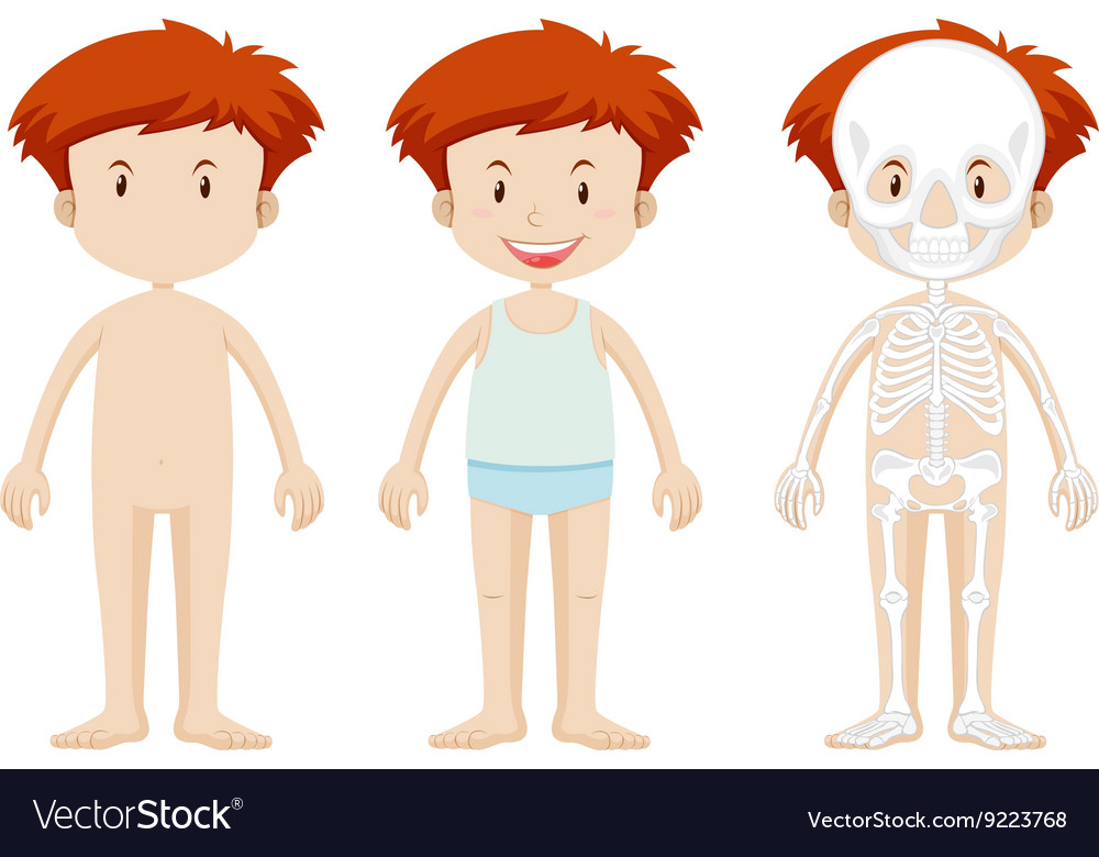 Little boy and skeleton structor vector