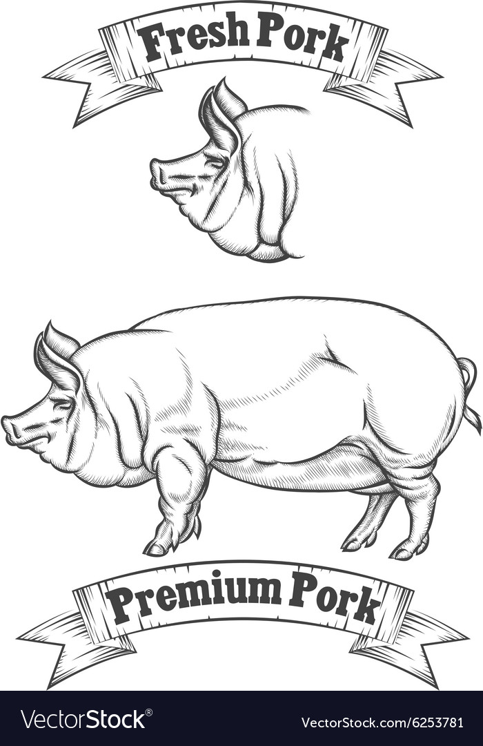 Premium pork meat label butcher emblems or vector