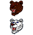angry bear head for you design vector image vector image