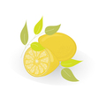 Lemon isolated on white vector image