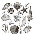 set of seashells on white background vector image