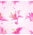 seamless texture lily pink flowers vector image