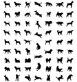 races of dogs vector image vector image