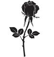 rose black vector image vector image
