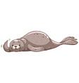 Seal with gray skin waving vector image vector image