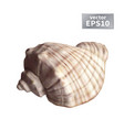 realistic seashell isolated vector image