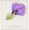 crocuses bouquet vector image vector image
