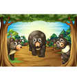 Bears and jungle vector image vector image