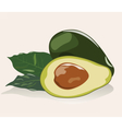 Avocado fruit isolated vector image