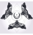 Butterflies with moon sacred geometry circle vector image